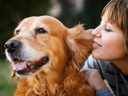 pet insurance that covers wellness