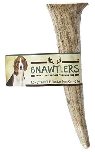 5 Best Chew Bones For Dogs In 2019 - Pet Parents Gnawtlers - Premium Elk Antlers for Dogs